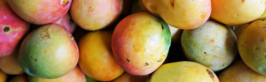 fruit-mango