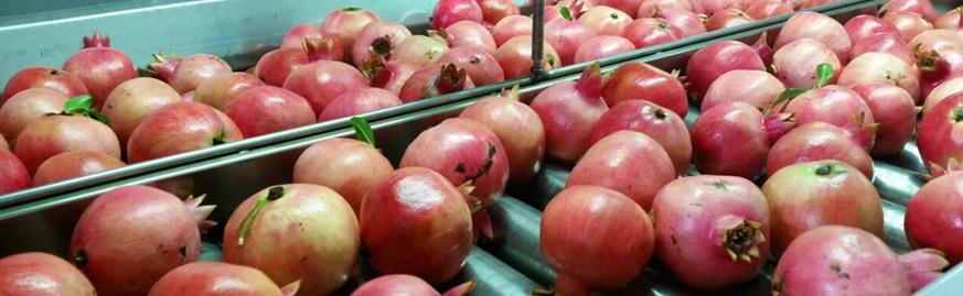 fruit-rimonim